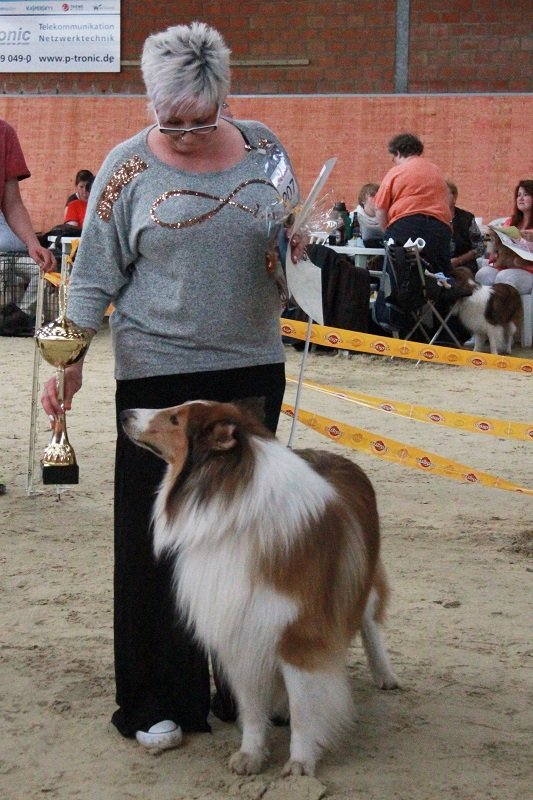 IMG 1503BOB Collie1.platz 1.platz Best of Colliemurphy